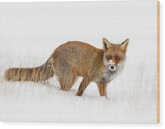 Red Fox In A Snow Covered Scene Wood Print