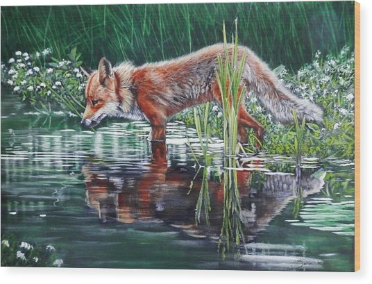 Red Fox Reflecting Wood Print