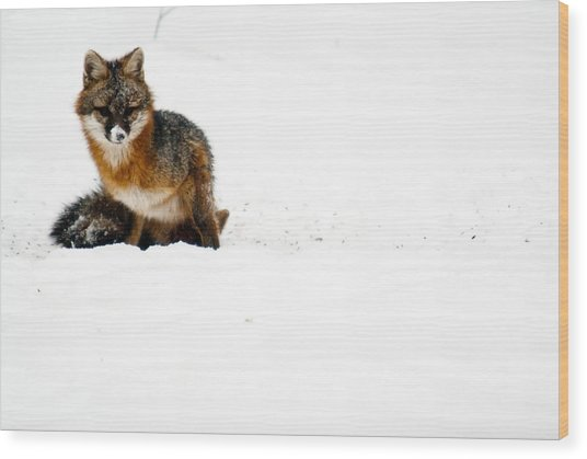 Red Fox In The Snow Wood Print