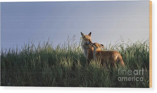 Red Fox Morning Wood Print