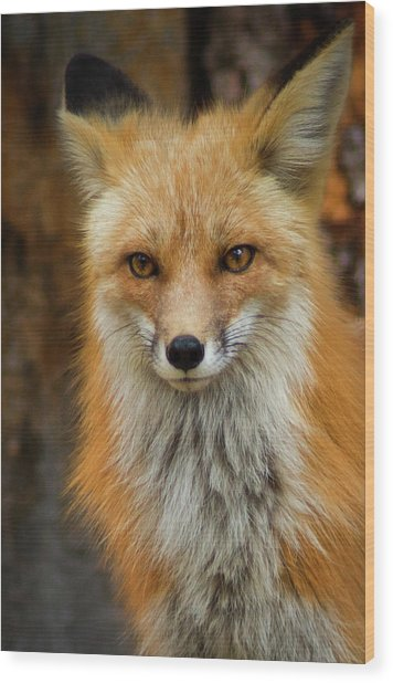 Wood Print featuring the photograph Red Fox Portrait by John De Bord