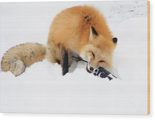 Red Fox To Base Wood Print