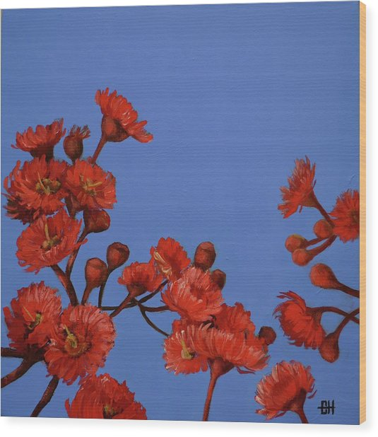 Red Gum Blossoms Wood Print