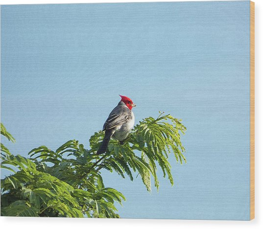 Red-headed Cardinal On A Branch Wood Print