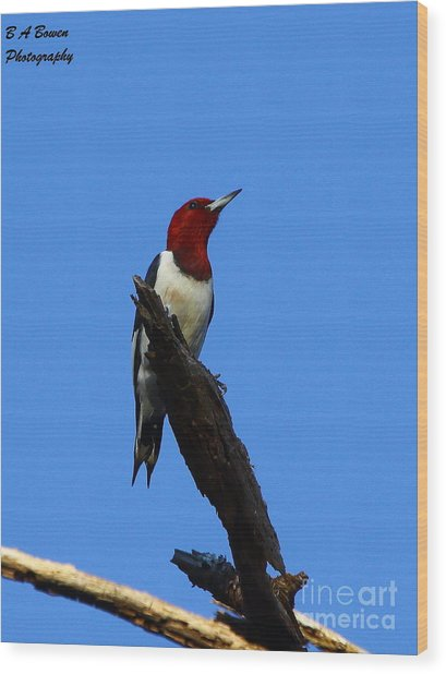 Red Headed Woodpecker On A Snag Wood Print