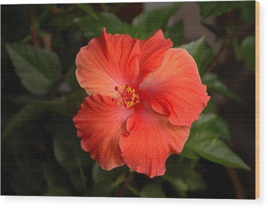 Red Hibiscus 2 Wood Print