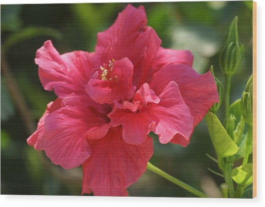 Red Hibiscus Flower 5 Wood Print