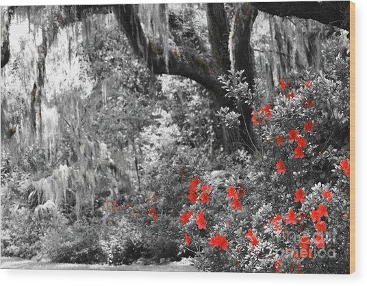 Wood Print featuring the photograph Red In The Garden by Patti Whitten