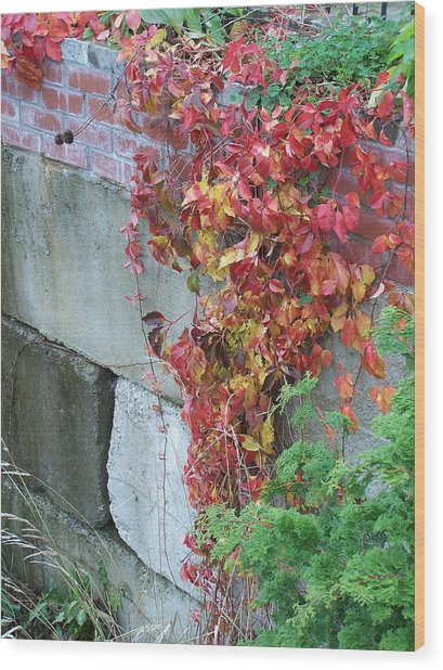 Red Ivy Wood Print by Gene Ritchhart