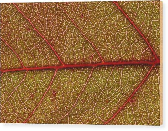 Red Leaf Macro Wood Print by Frank Tschakert