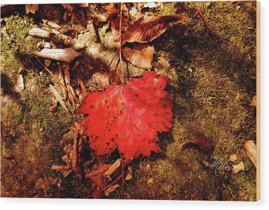 Red Leaf Wood Print