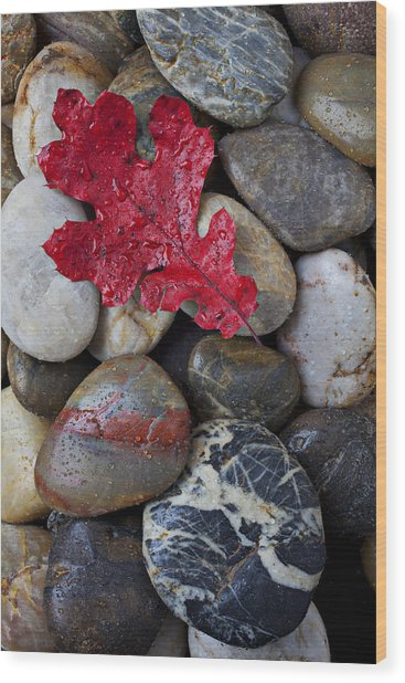 Red Leaf Wet Stones Wood Print