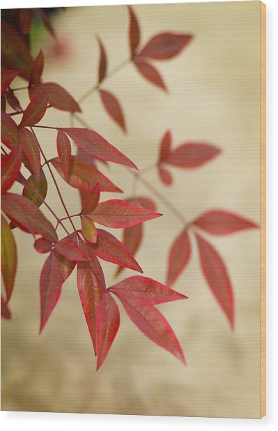 Red Leaves Wood Print