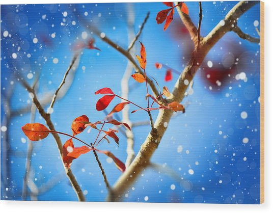 Red Leaves On Blue Background Wood Print