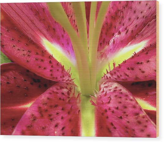 Red Lily Closeup Wood Print
