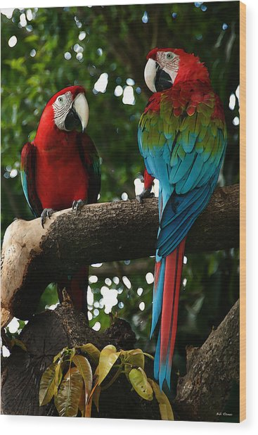 Red Macaws Wood Print