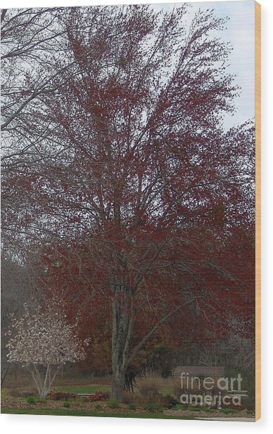 Red Maple Wood Print by Emily Kelley