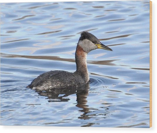 Red-necked Grebe Wood Print