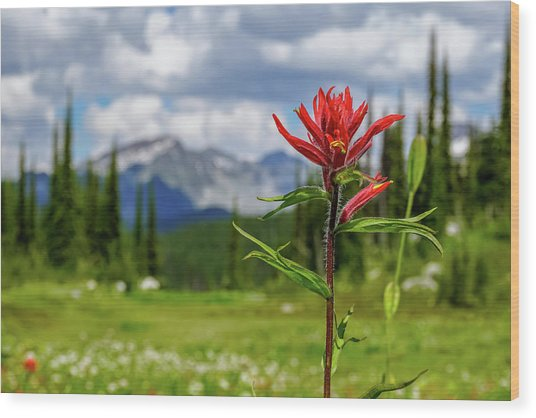 Red Paintbrush On Mount Revelstoke Wood Print