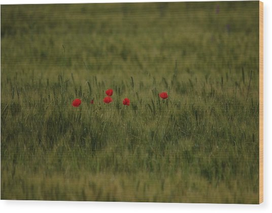 Red Poppies In Meadow Wood Print