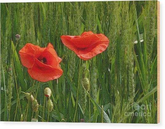 Red Poppy Flowers In Grassland 2 Wood Print