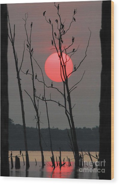 Red Rise Cormorants Wood Print