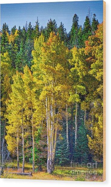 Red River Aspens Wood Print