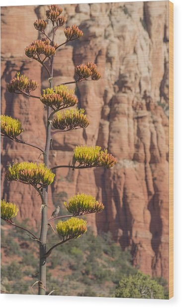 Red Rocks And Century Plant Wood Print