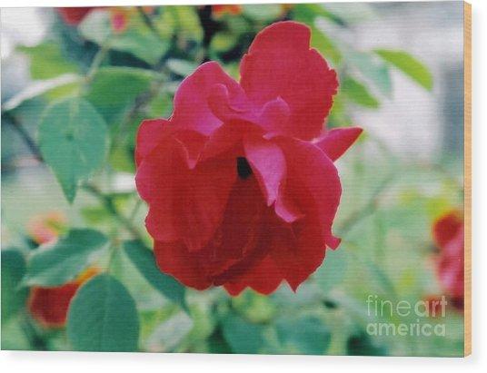 Red Rose Wood Print by Emily Kelley