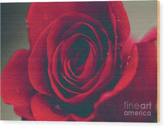 Wood Print featuring the photograph Red Rose Floral Bliss by Sharon Mau