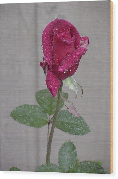 Red Rose In Rain Wood Print