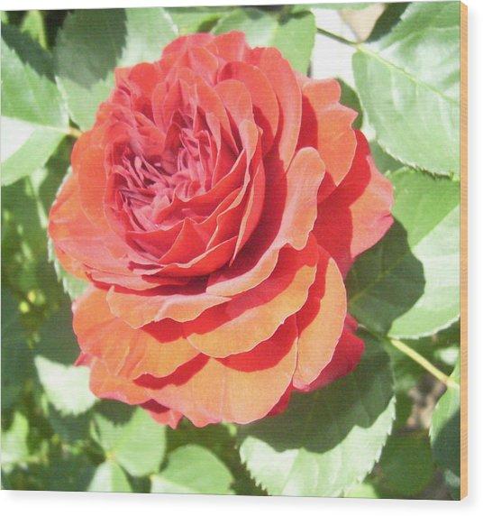 Red Rose Wood Print by Lisa Roy