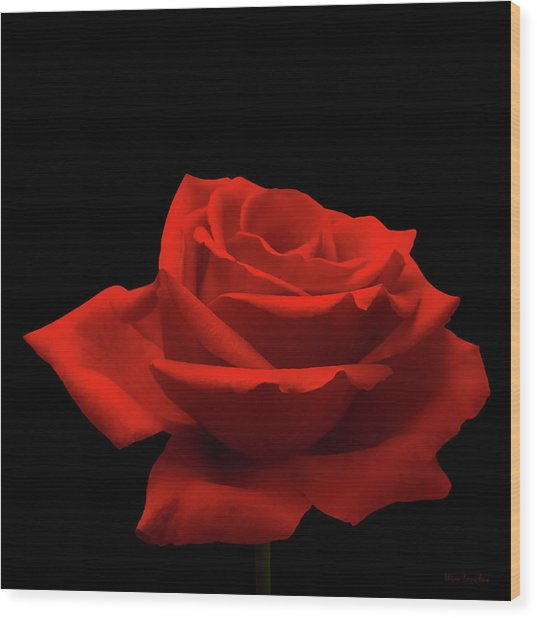 Red Rose On Black Wood Print