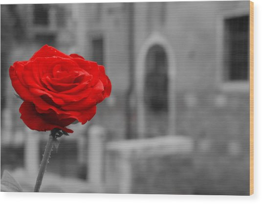 Red Rose With Black And White Background Wood Print by Michael Henderson