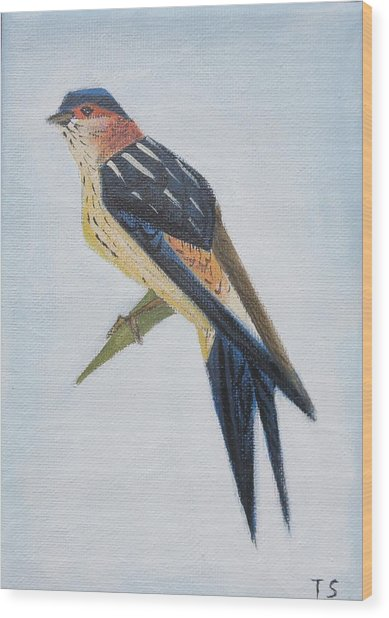 Red-rumped Swallow Wood Print