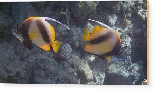 Red Sea Bannerfish 2 Wood Print