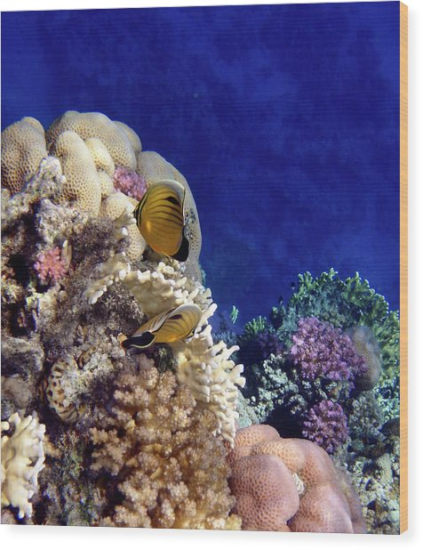 Red Sea Exotic World Wood Print