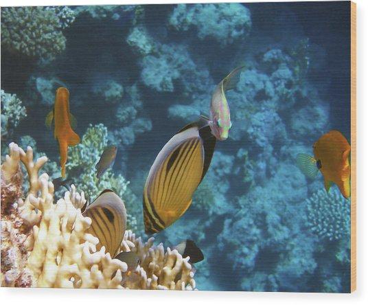 Red Sea Magical World Wood Print