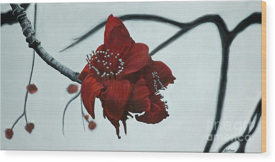 Red Silk Cotton Flower Wood Print