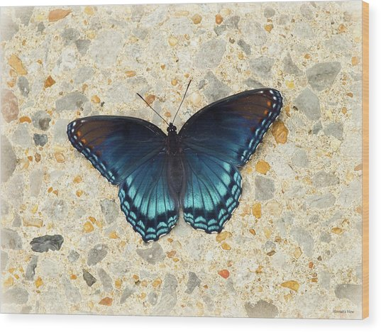 Red Spotted Purple Butterfly  Wood Print