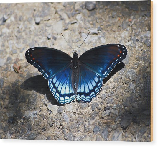 Red-spotted Purple Butterfly Wood Print