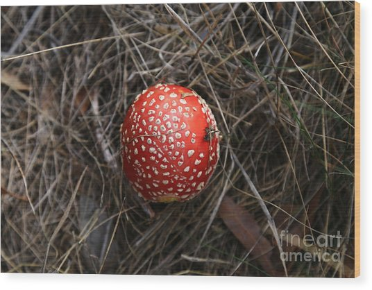 Red Spotty Toadstool Wood Print