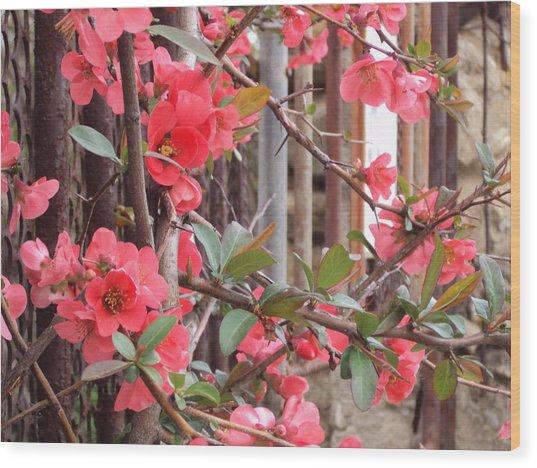 Red Spring Wood Print by David Du Hempsey