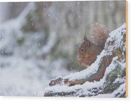 Red Squirrel On Snowy Stump Wood Print
