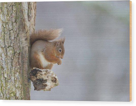 Red Squirrel On Tree Fungus Wood Print