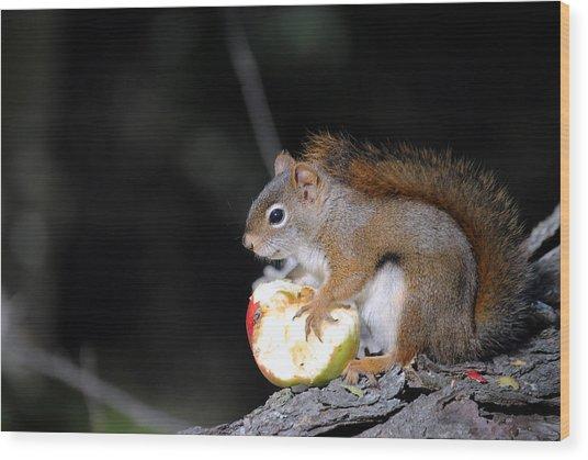 Red Squirrel Wood Print by Steven Scott