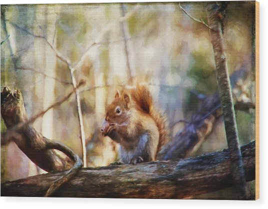 Red Squirrel With Pinecone Wood Print