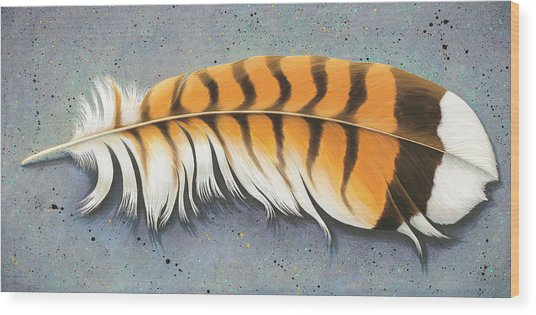 Red Tail Hawk Feather Wood Print