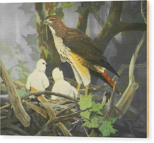 Red-tailed Hawk And Chicks Available Wood Print