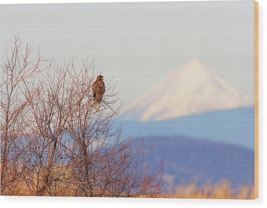Red-tailed Hawk And Mount Shasta - Northern California Wood Print